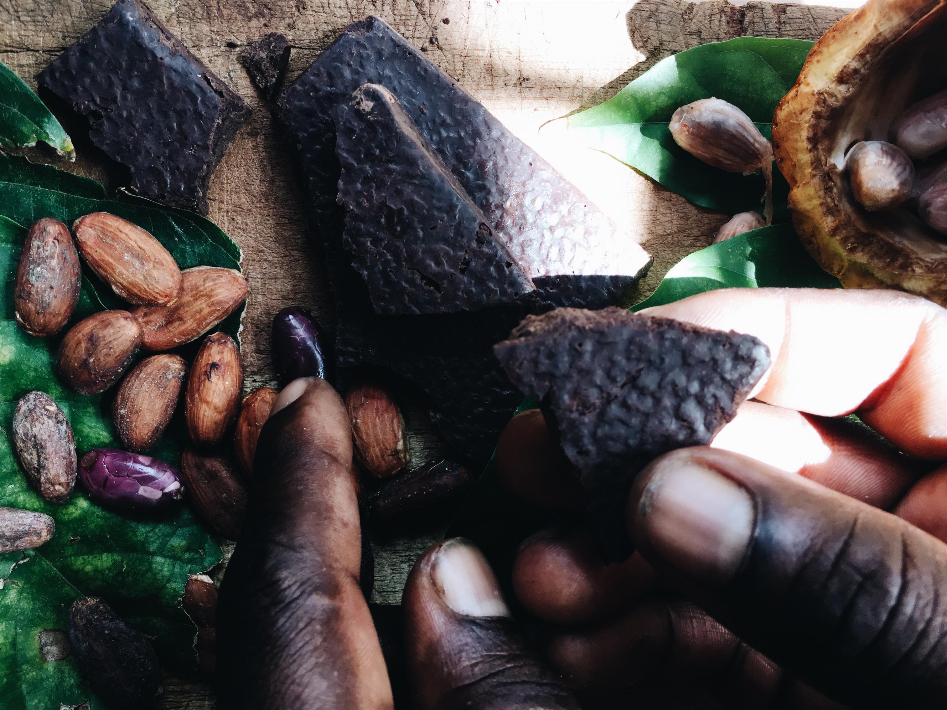 Benditas manos del productor de cacao
