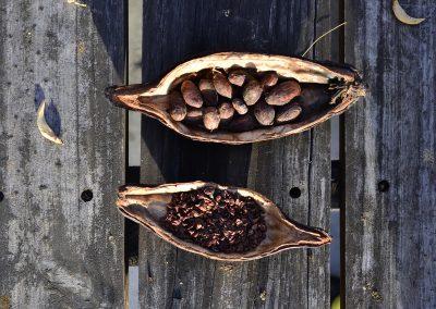 Cacaos venezolanos