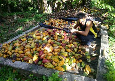 Visita Hacienda Cacaos venezolanos