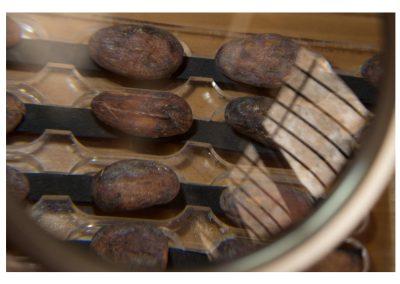 Prueba de corte de cacaos